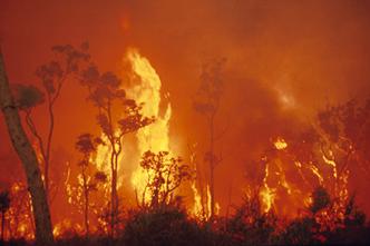 Crown fire photo1 - credit bushfire CRC and DSE.jpg